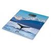 Pèse-personne en Verre - Fjords / Baleine - LITTLE BALANCE